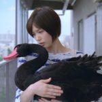 aflac blackswan