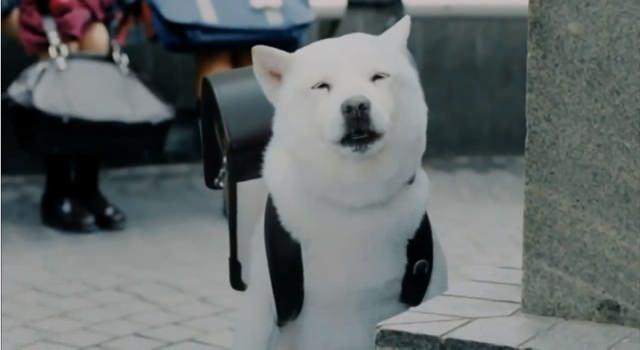 お父さん犬