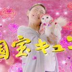 日清ペットフード 懐石シリーズ 「国宝キュン」篇